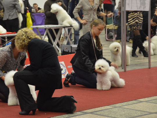 caprie for cacib and zagreb winner title